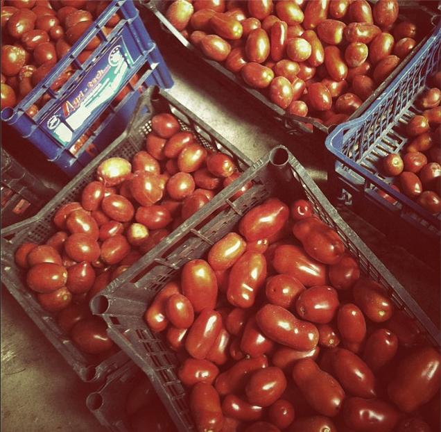 pommarola homemade tomato sauce