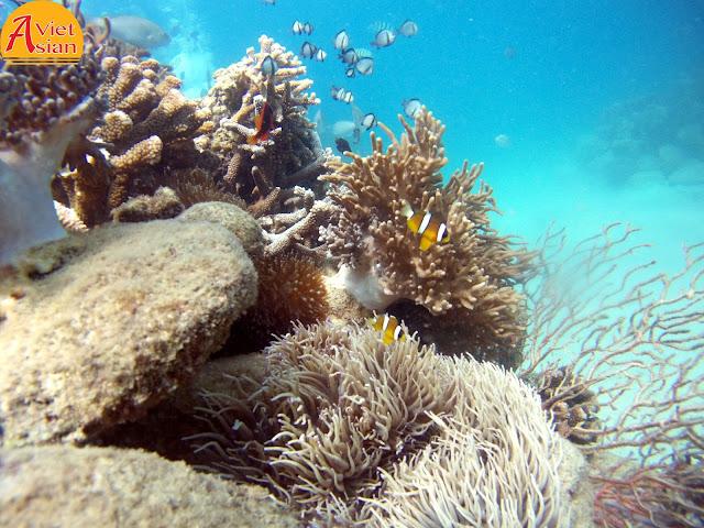 Tour Đi Bộ Dưới Biển 9