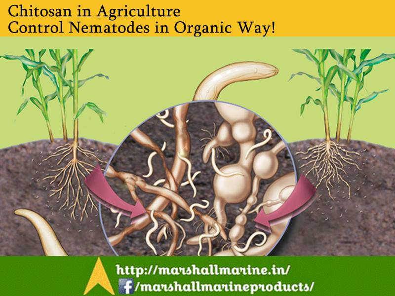 Chitosan in Agriculture