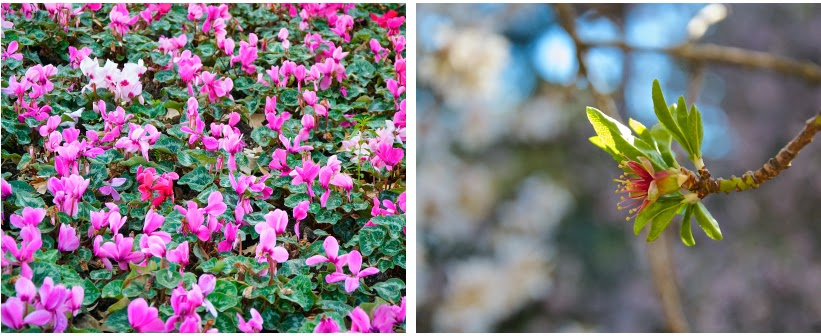 Flores en Quinta de los Molinos