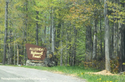 Allegheny National Forest in Northwestern Pennsylvania