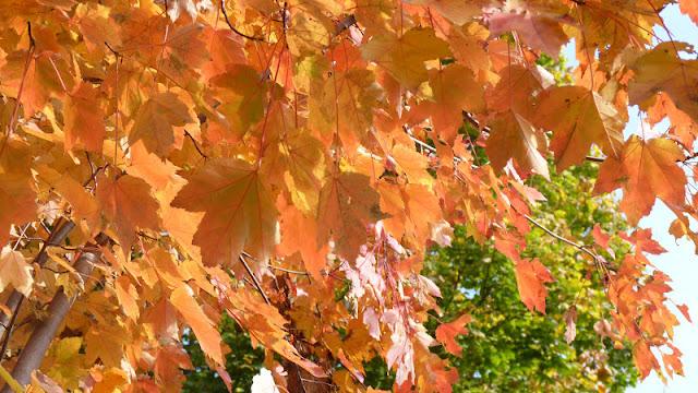 otoño en Boston