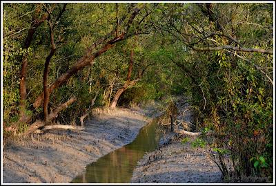 Mangrove Forest - Nijhum Dwip, Nijhum Island Hatia, Trip Navigation Bangladesh, Nijhum Dwip Travel Guide
