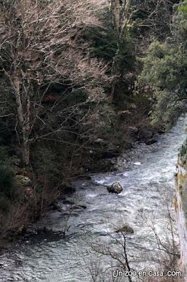 Río Salazar a su paso por la Foz de Arbayún