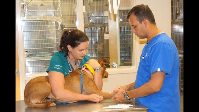 تطعيمات الكلاب
