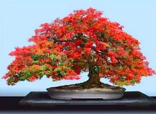 fotos de bonsai
