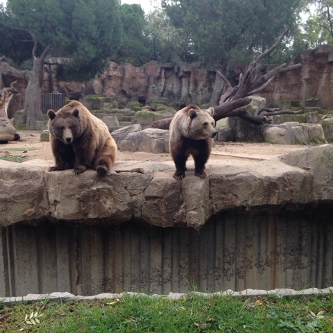 Brown Bears at Madrid Zoo