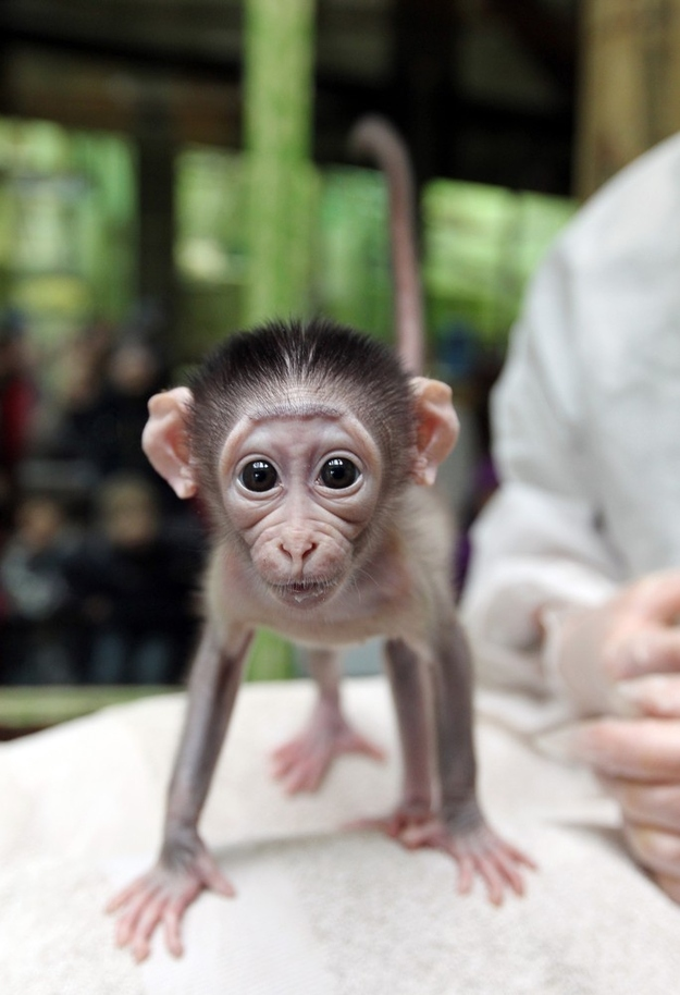 Shy Baby Monkey At Paris Zoo 8 Pics Amazing Creatures