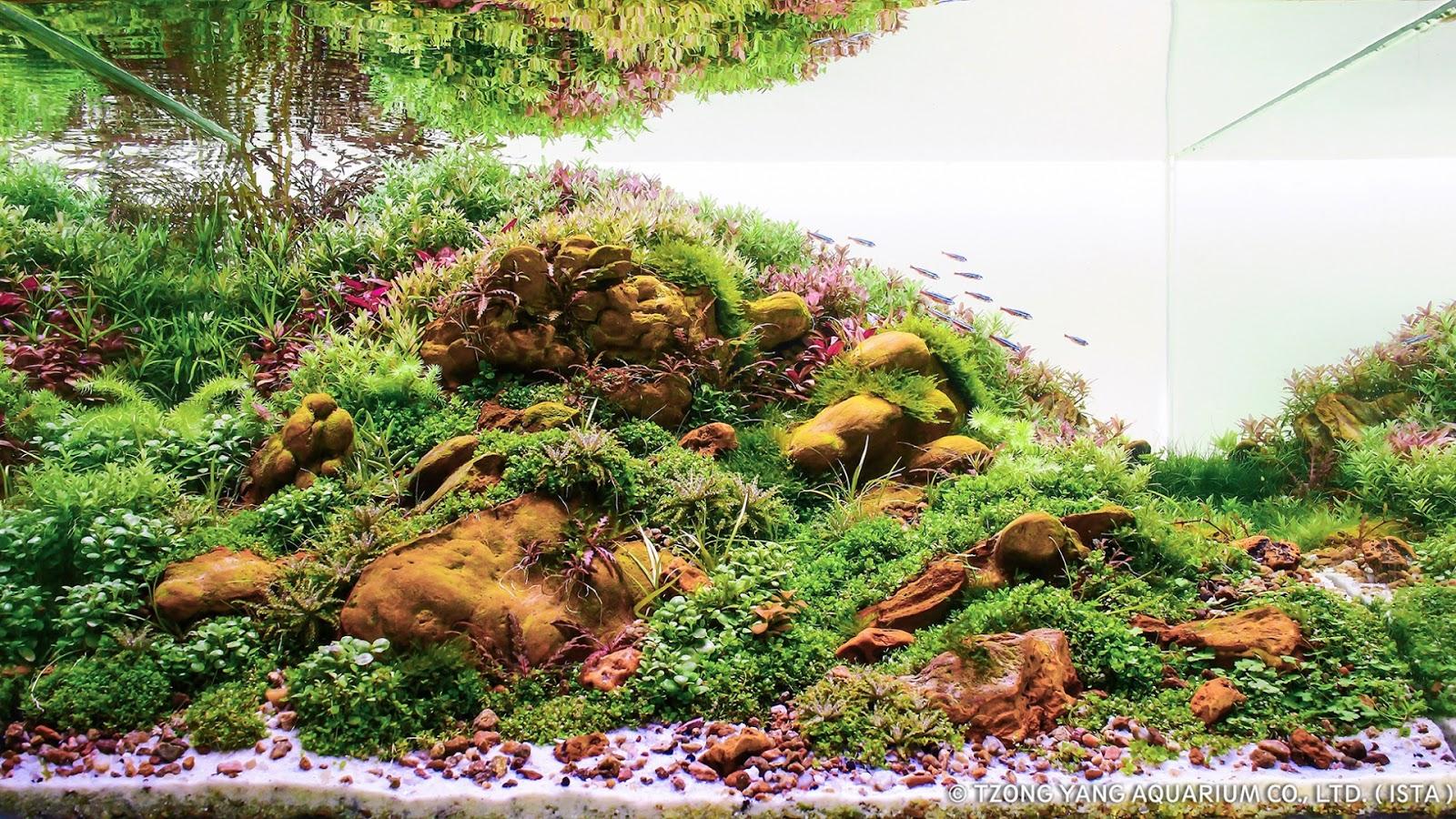 Tận dụng những viên đá nhỏ tạo chi tiết cho hồ thủy sinh