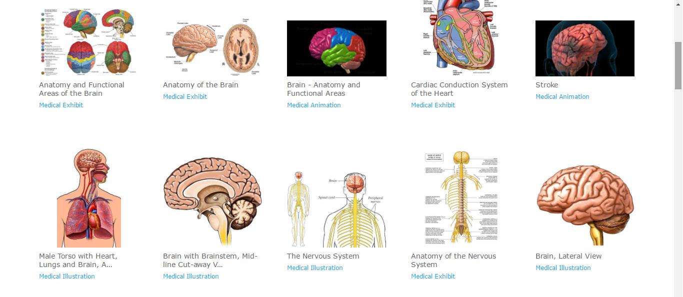 Amazing Brain Anatomy Review Illustration Human Anatomy Images
