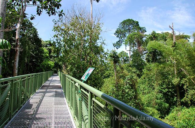 Steel Canopy Walk Sabah