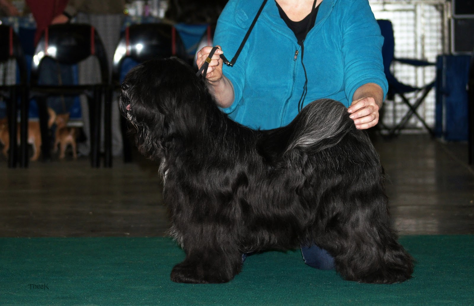 From Heaven's Earth Tibetan Terriers: Show News