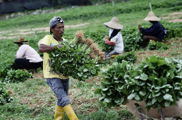 Image result for Gambar pekerja asing