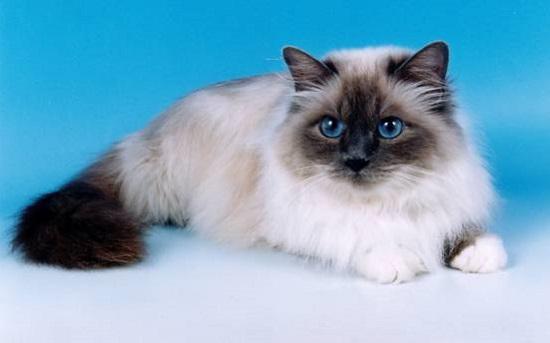 gambar kucing tercantik