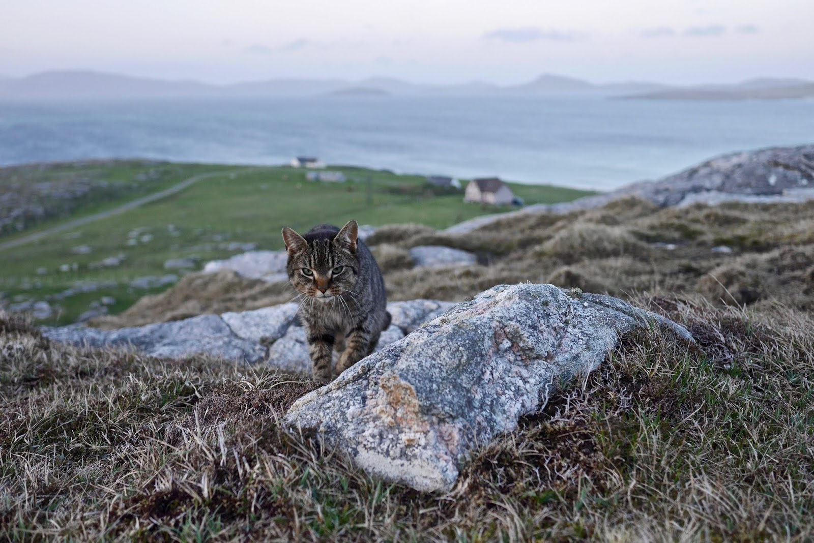 Barra Cat that killed our tent , Almost Chic and Cal McTravels during their Scottish Island Hopping in the outer Hebrides