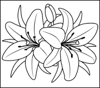 Lilies Coloring 1