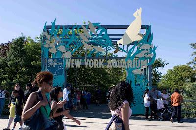 Acquario new york