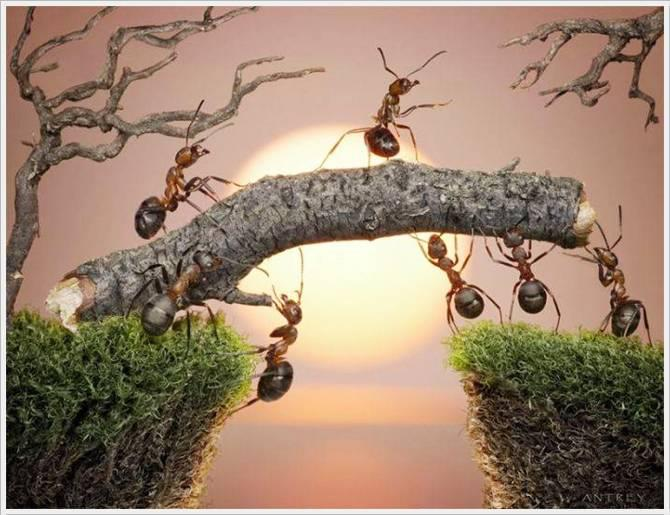 Proverbs 6:6 - 'Go to the ant, you sluggard; consider its ways and be wise!'