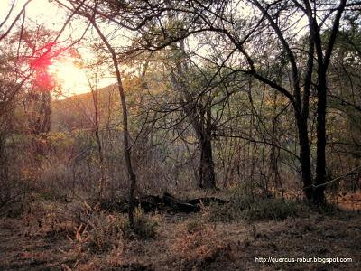 Atardecer en el bosque subcaducifolio en el Cerro del Águila