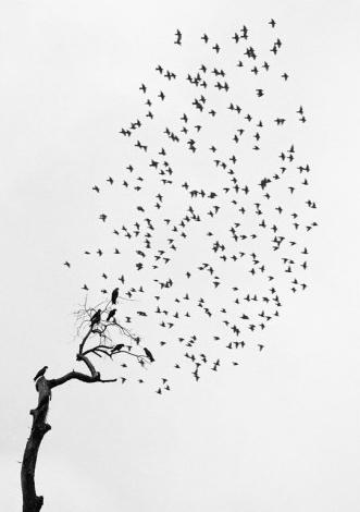 Photo d'un vol d'oiseau au dessus d'un arbre de Pentti Sammallahti
