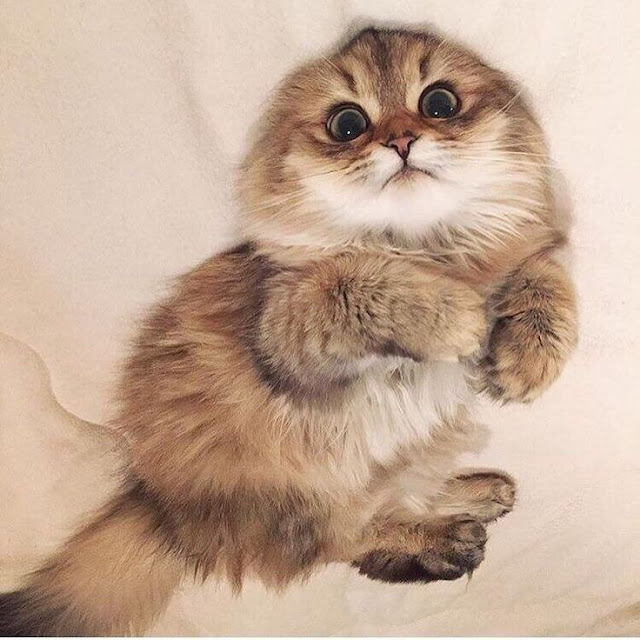 Kisah Seorang Wanita Tua Menyayangi Kucing
