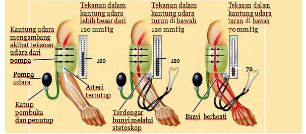 Tekanan Darah pada Sistem Peredaran Darah Manusia