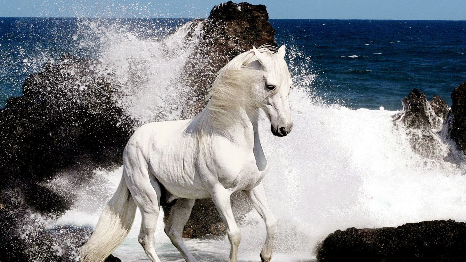 Best Horse Hd Wallpapers Best Wallpapers Pics Free Download
