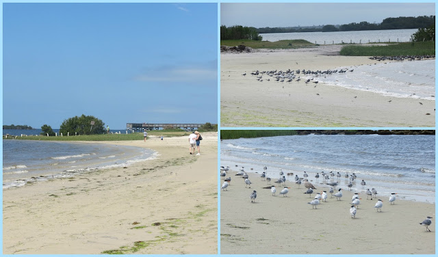 Are You Ready For Some More Of Florida These Shots From The Fort Island Gulf Beach In Crystal River On S Coast