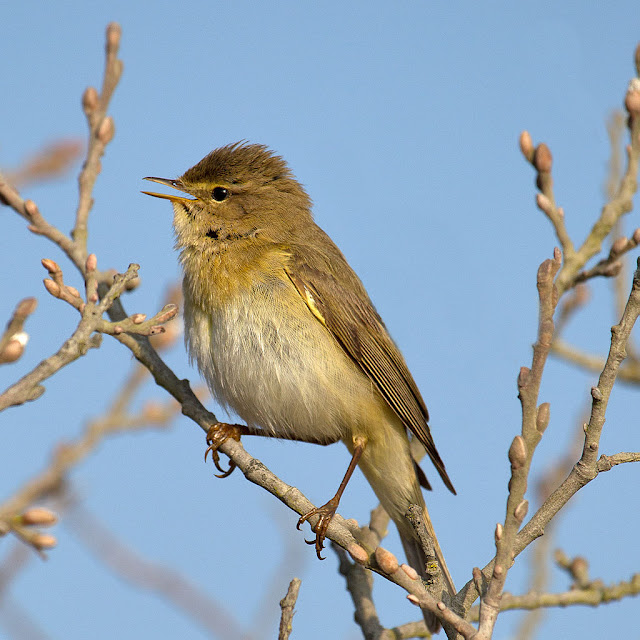 Study reveals impact of habitat fragmentation on migrant birds