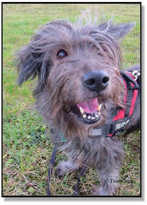 Lotte ist ein fröhlicher Hund