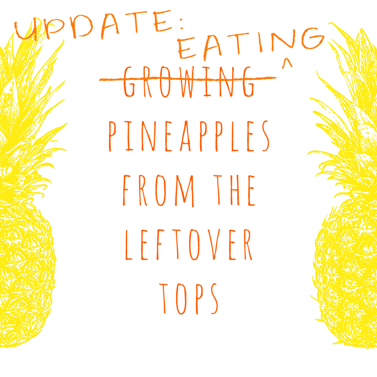 pineapples grown from leftover tops