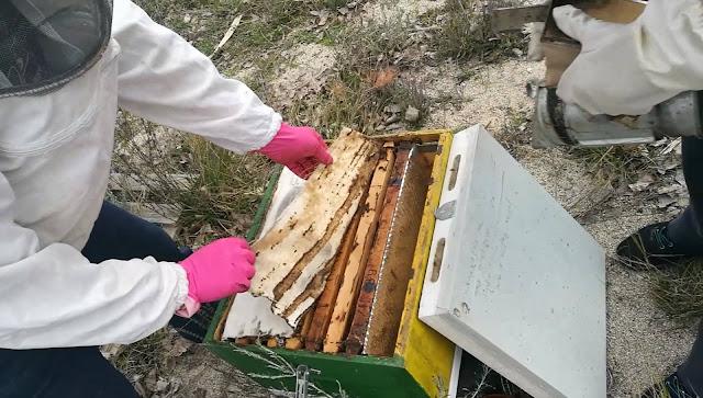 Οι μελισσοκόμοι του ΔΙΕΚ Επιδαύρου εν δράση