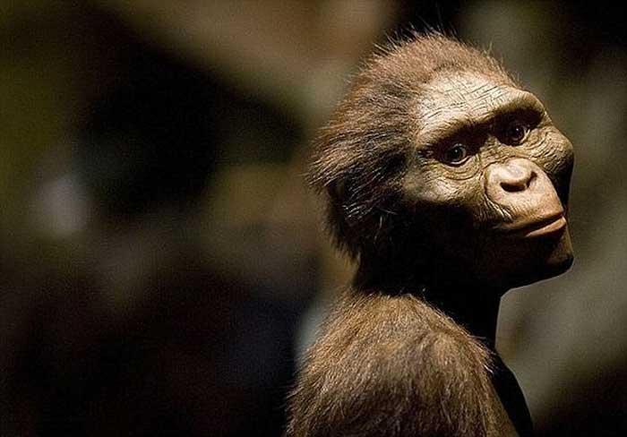 Human Ancestor Lucy
