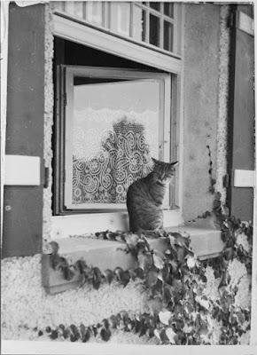 Eine Katze am Fenster - 1920-1940