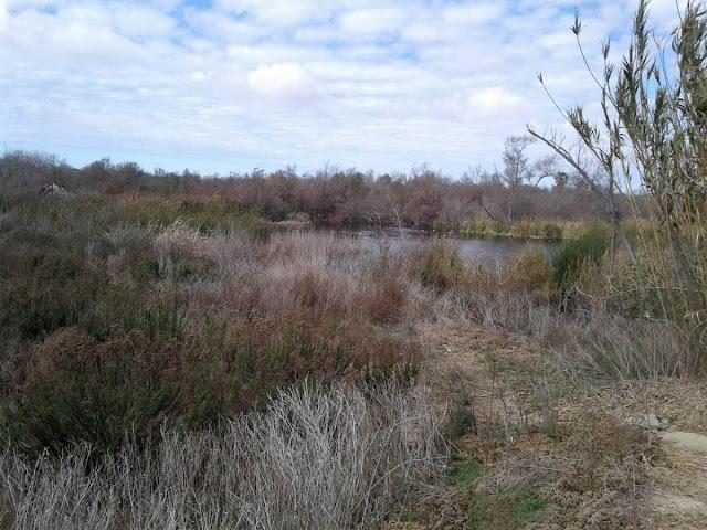 Stick Pond