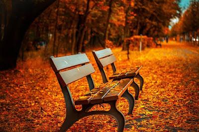 j'adore vraiment l'Automne, ses jolis moments et ses si belles couleurs de feu