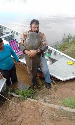 Em Rondônia, Pescadores jaruenses pegam jaú de 112 quilos no rio Machado!