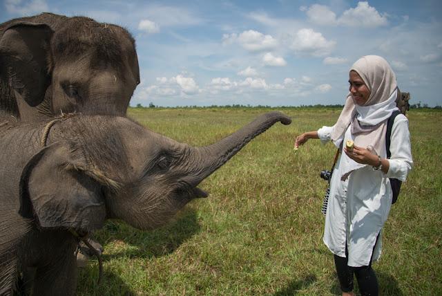 Pusat Konservasi Gajah Way Kambas Lampung Timur