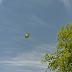 UFO Spotted On Google Earth Map In Sacramento, California