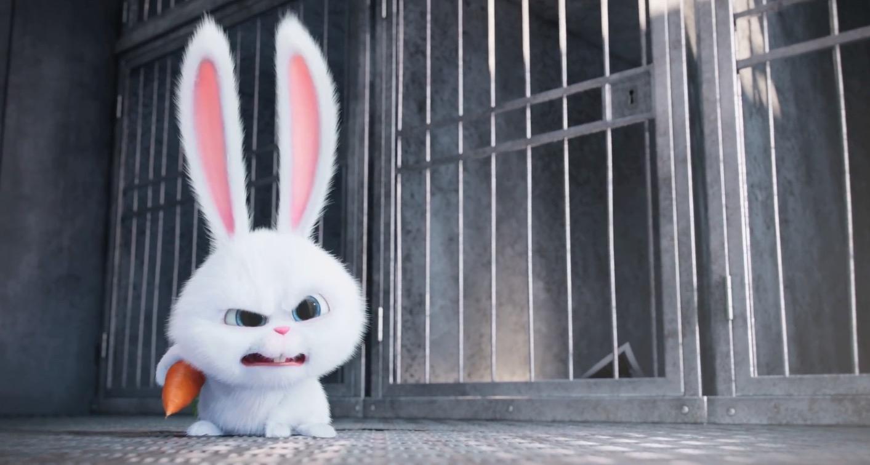 Днем рождения, злой кролик картинки прикол