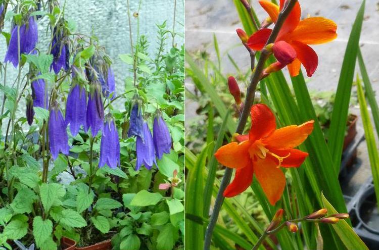 Les feuillets de fardoise au royaume des plantes vivaces for Les plantes vivaces