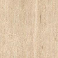 Las maderas tipos de maderas y caracter sticas - Madera de abedul ...