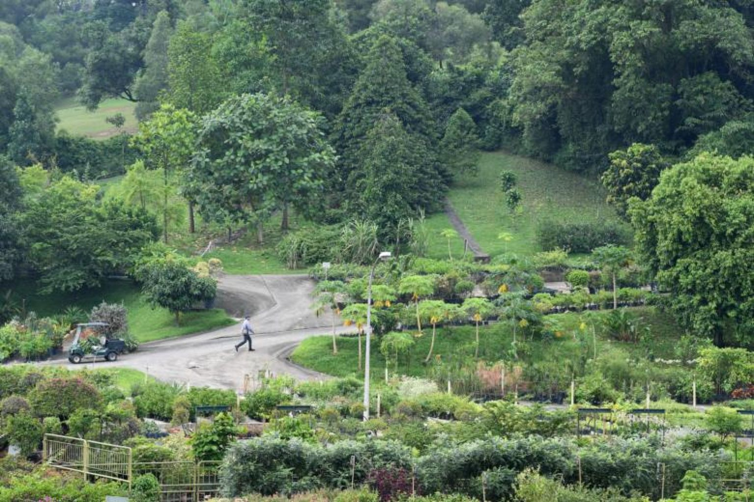 Increased expertise, more holistic overview of flora and fauna for NParks
