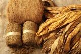 Cara membuat pestisida nabati dengan tembakau dan daun pepaya untuk pertanian organik