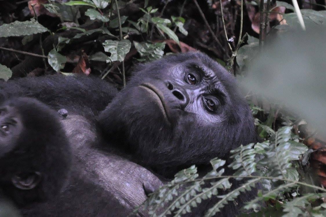 Gorilla girl shaved, naked bbw sex gifs