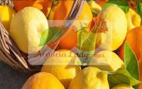 Logo Vinci gratis forniture di prodotti Arancia Ladyrosa ( agrumi, bottiglia Salsa e paste di mandorle)