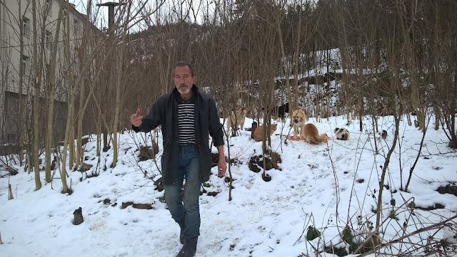 Kastamonu'da Muzaffer Tabak kendi çabalarıyla sokak hayvanlarına sahip çıkıyor...
