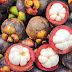Fruit : Manggis (Mangosteen)