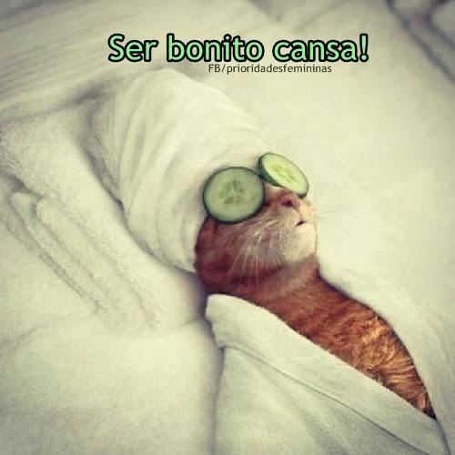 gato no spa com toalha