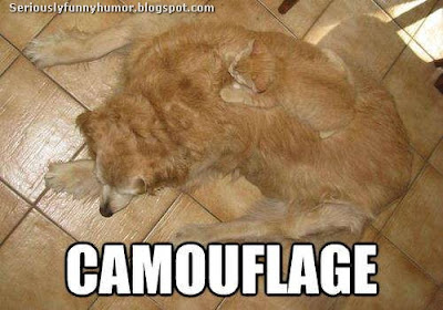 Cat laying on dog - Camouflage 100% effective!